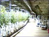 Marijuana Growing Operation in Cave